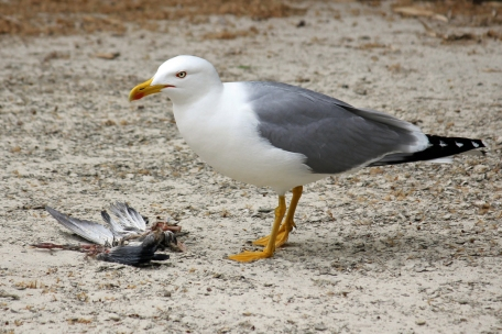 eating-bird
